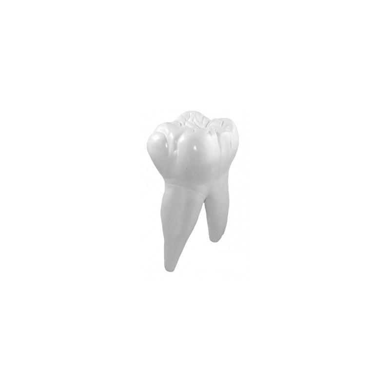 Zęby trzonowe-model