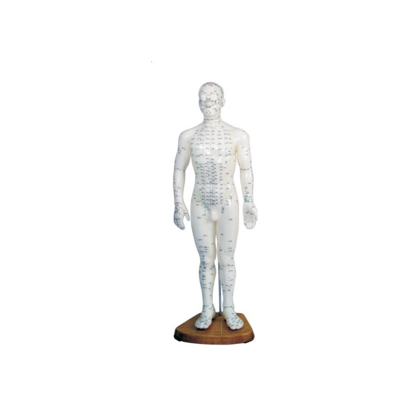 Model człowieka z punktami akupunktury