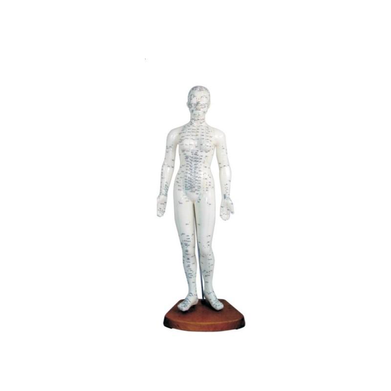 Model budowy człowieka - akupunktura (kobieta 48cm)