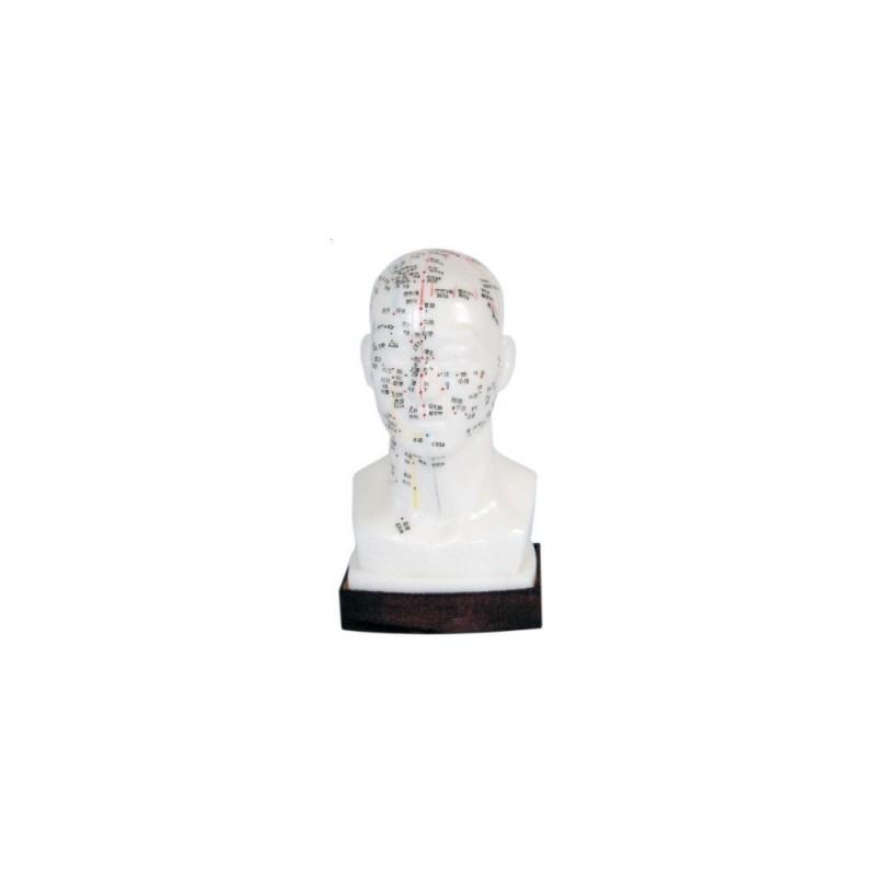 Model głowy - akupunktura 20cm