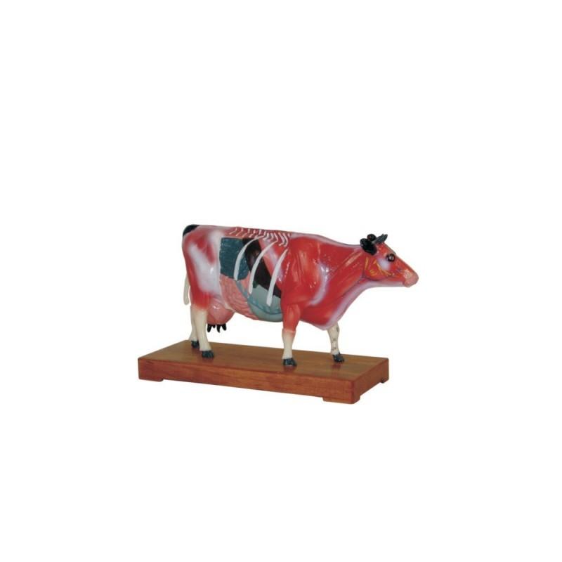 Model krowy - akupunktura