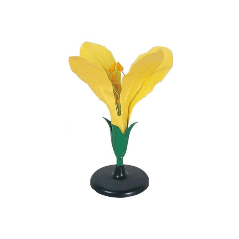 Model kwiatu kapusty