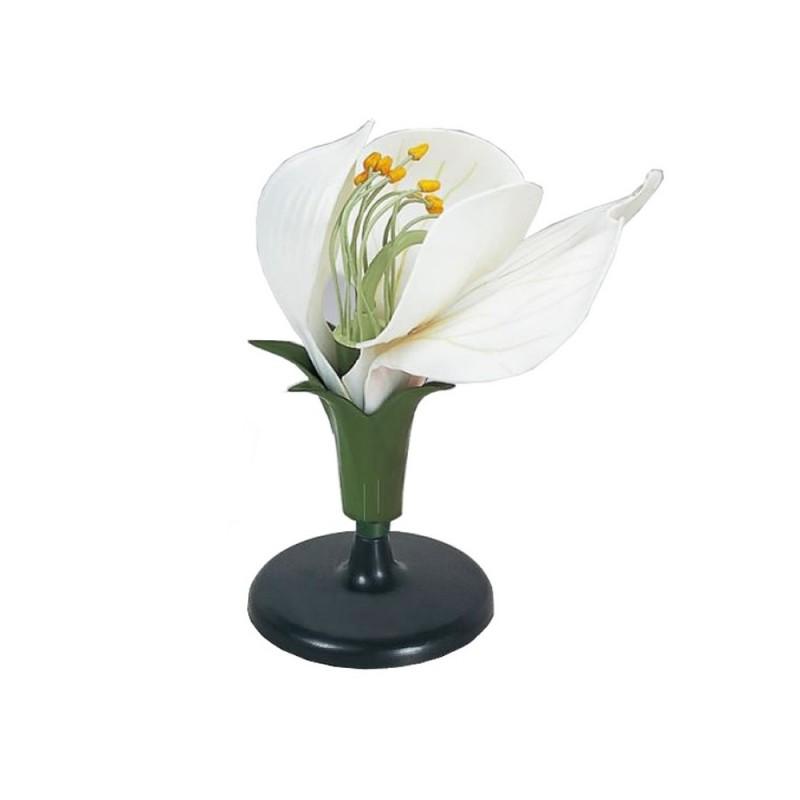 Model kwiatu grochu