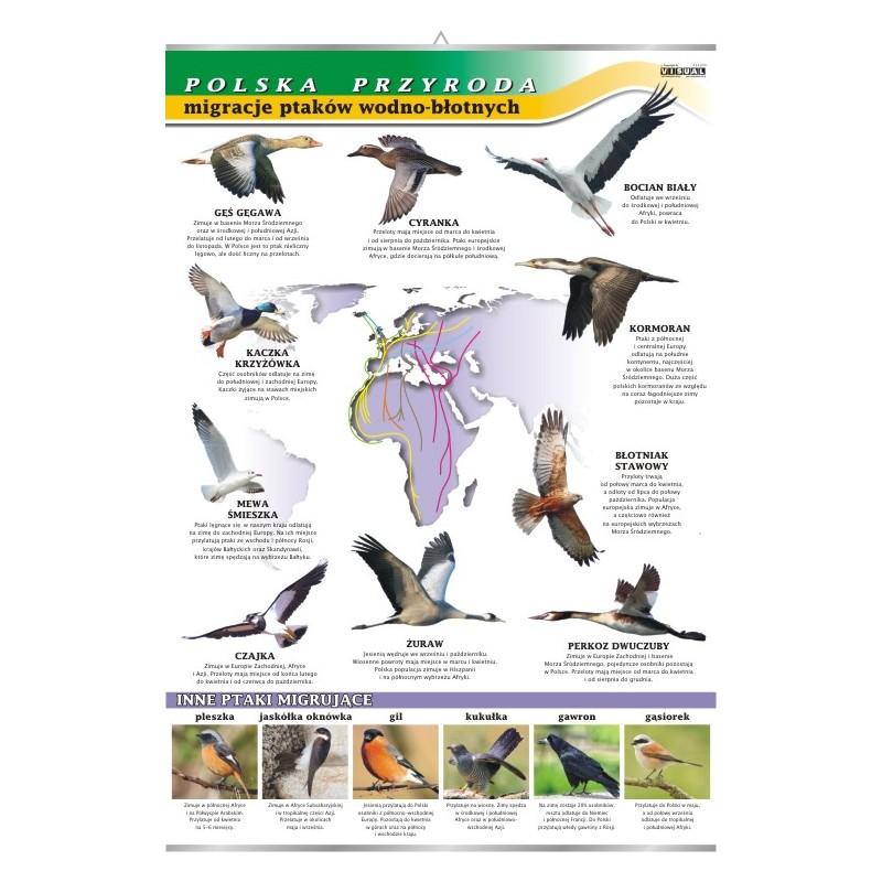 Migracje ptaków - polska przyroda