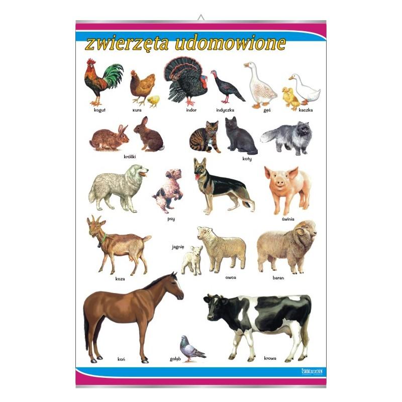 Zwierzęta udomowione