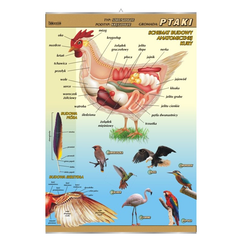 Ptaki - budowa anatomiczna