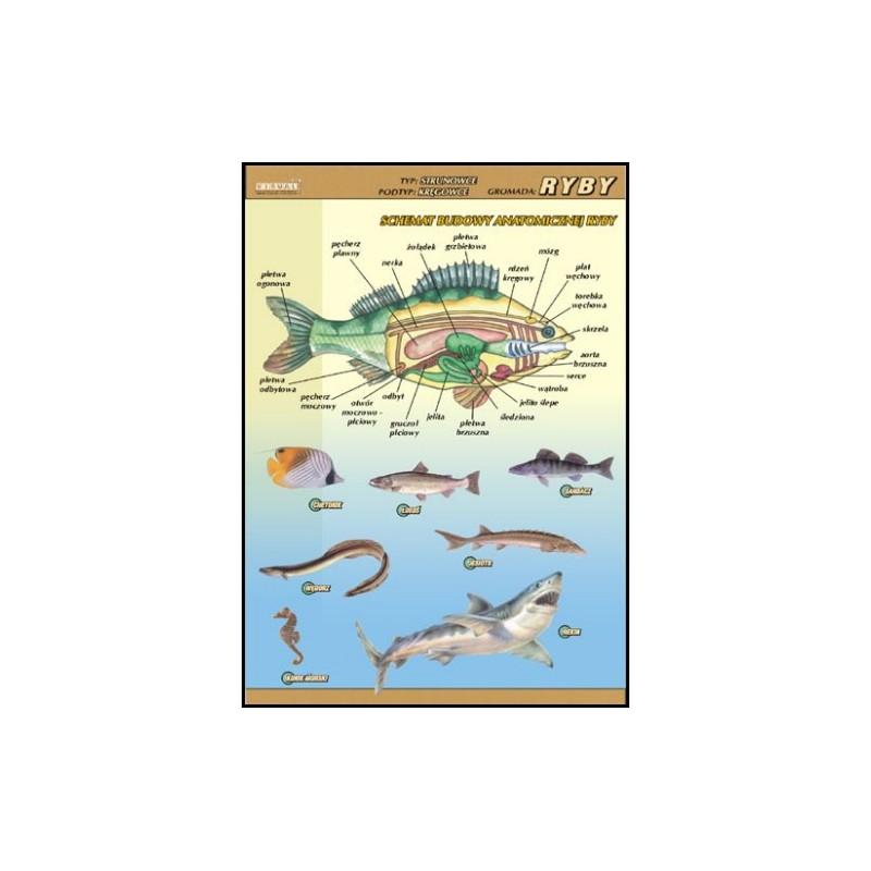 Ryby - budowa anatomiczna