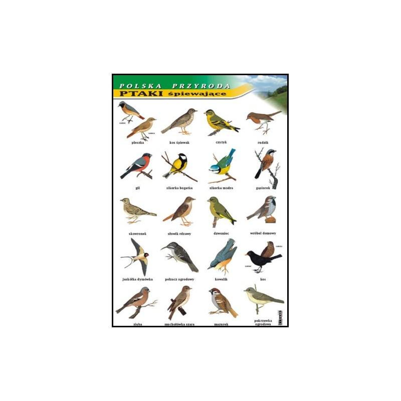 Ptaki śpiewające - polska przyroda