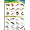 Ryby - polska przyroda