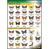Motyle - polska przyroda