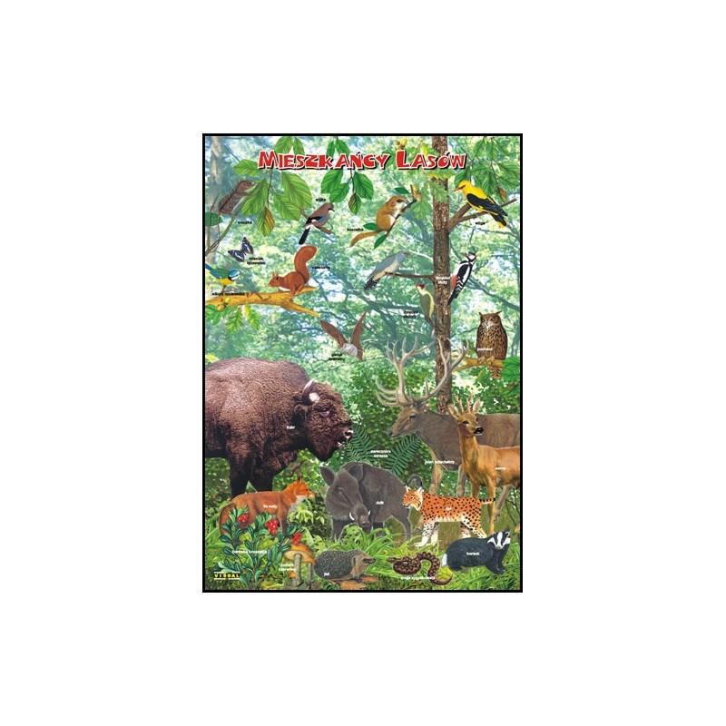 Mieszkańcy lasów