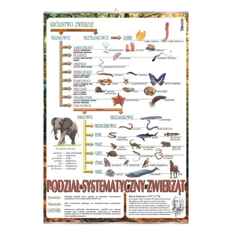 Systematyka zwierząt