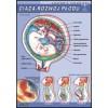 Ciąża - rozwój płodu ludzkiego