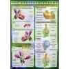 Budowa kwiatu, zapylenie, zapłodnienie (okrytozalążkowe)