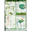 Budowa rośliny, proces fotosyntezy