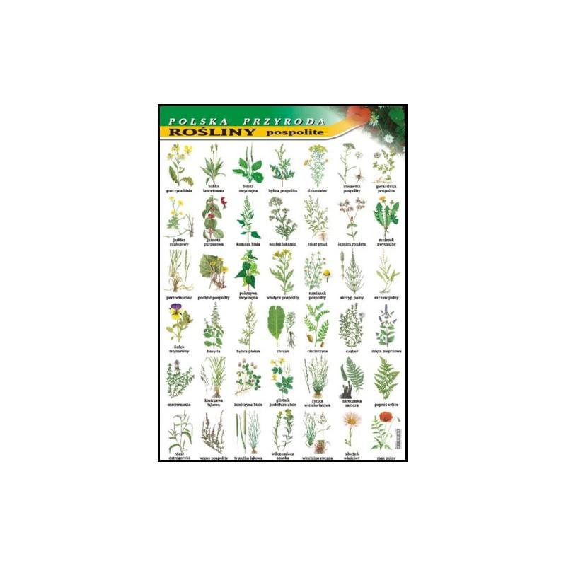 Rośliny pospolite