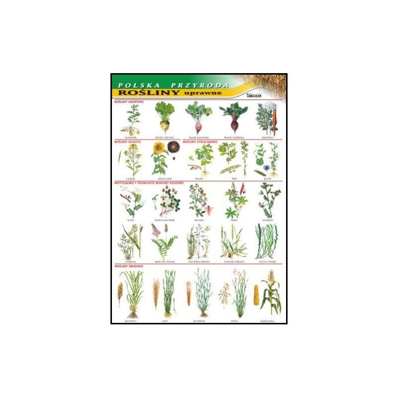 Rośliny uprawne