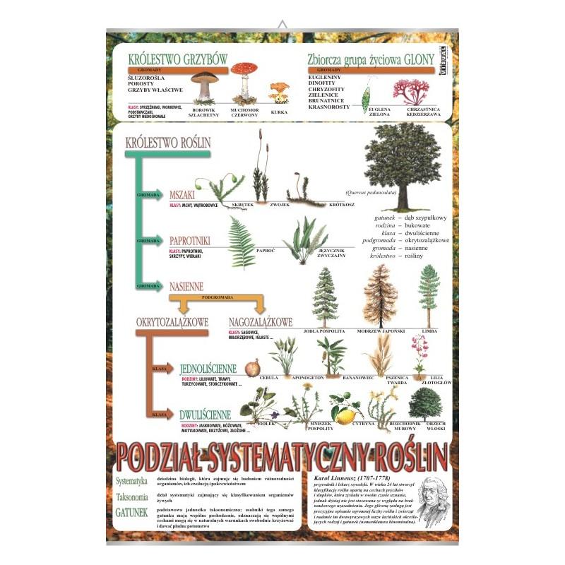 Systematyka roślin